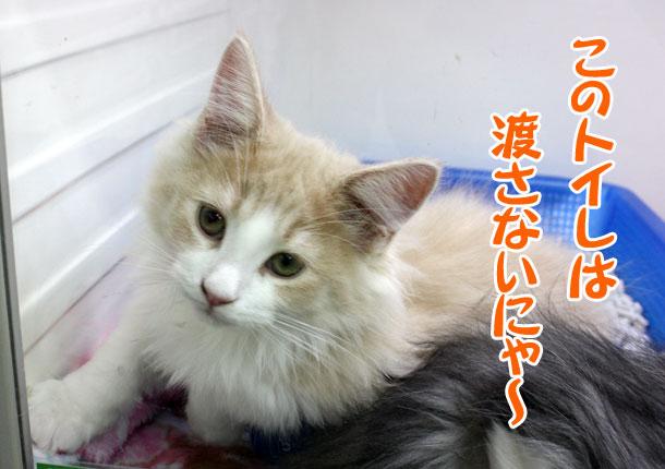 100330_今日のお猫様_4