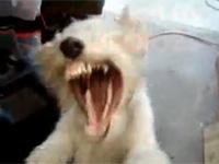 ヘビメタ好きな犬