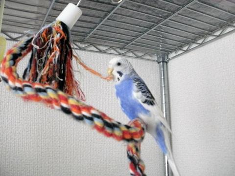 マリンお気に入りのロープ2