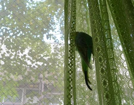 ディジーとカーテン2-2