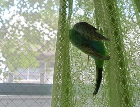 ディジーとカーテンと空