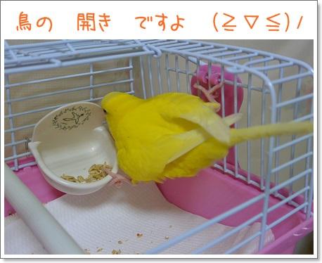 鳥の開き!