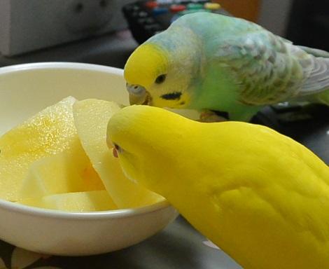 リンゴうまま1-1-1