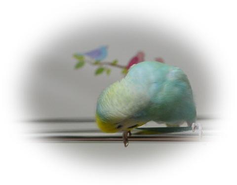 鳥さんこんにちは1
