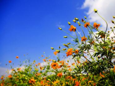 flowers-field[1]