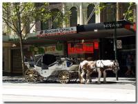 馬車とトラム-1-