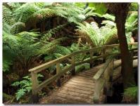 熱帯雨林-2-