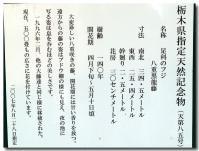八重黒龍藤-3-