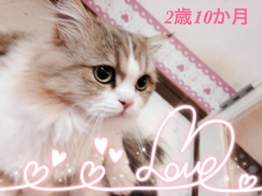 moblog_fbd1c906.jpg