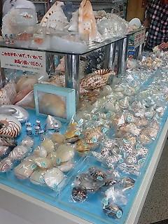 貝殻売ってます!