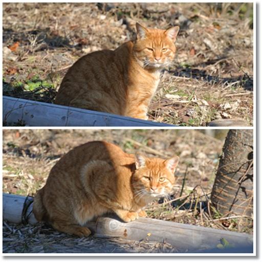 cats13_20131223172737c7c.jpg