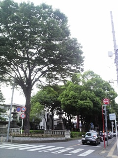 氷川神社参道
