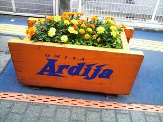 オレンジ花壇
