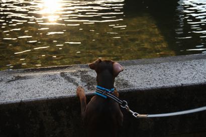 ウリエル君は池をのぞいて