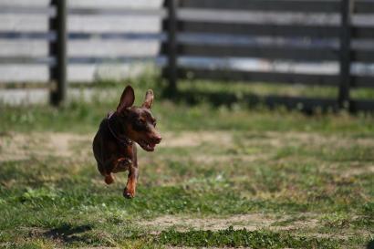 raphaちゃん飛ぶ