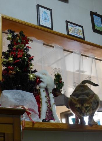 クリスマス写真!