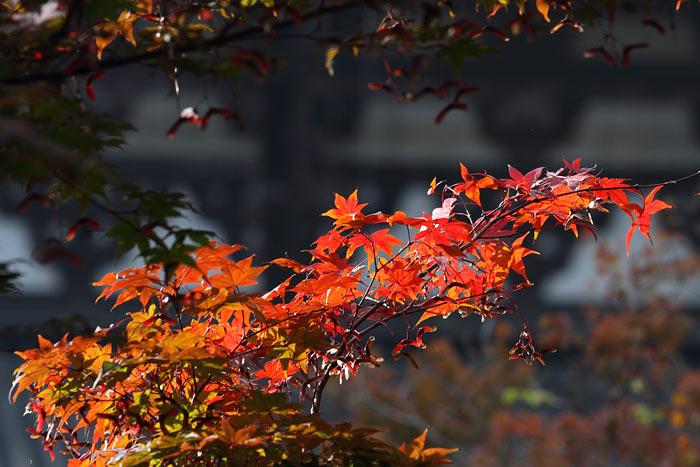 東大寺界隈 冬紅葉4