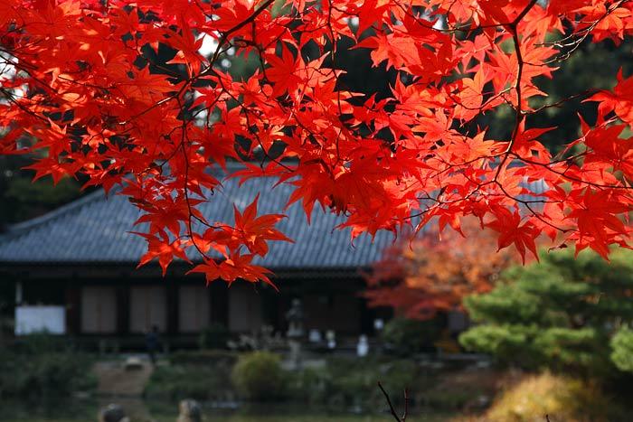 浄瑠璃寺 紅葉2