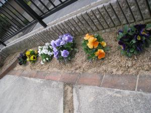春の花 3