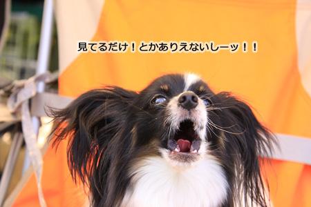 IMG_ma7287.jpg