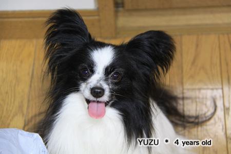 IMG_yuzu41737.jpg