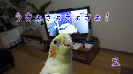 うきょきょきょ