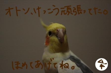 _MG_4789.jpg
