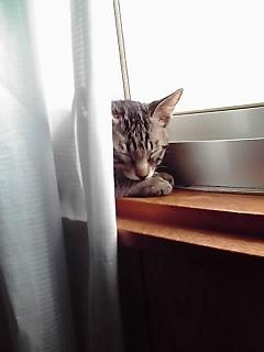 ラニ 窓辺