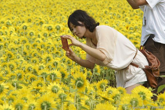 himawari12dd_eip.jpg