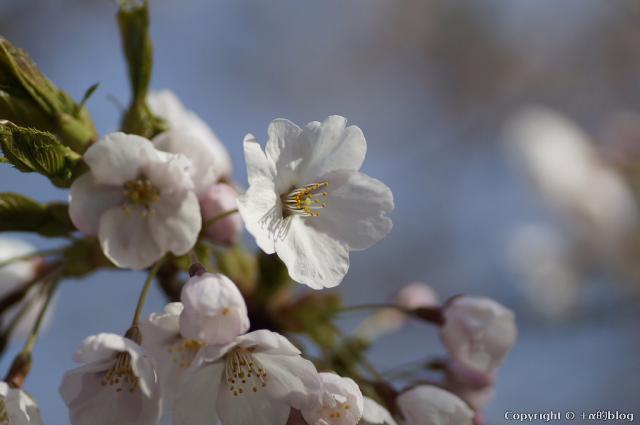 spring1305a_eip.jpg