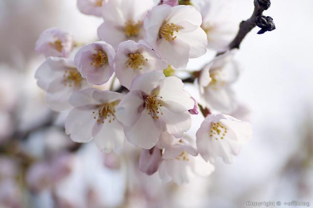 spring1305b_eip.jpg