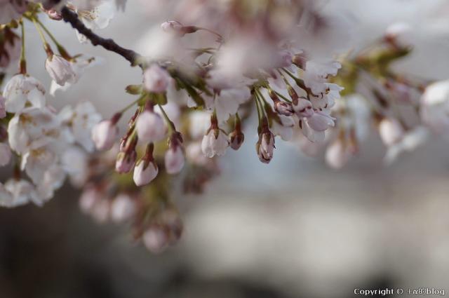 spring1305d_eip.jpg