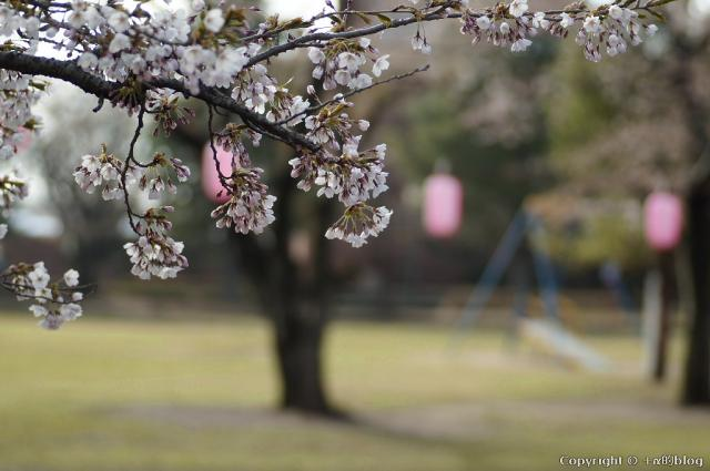 spring1305e_eip.jpg