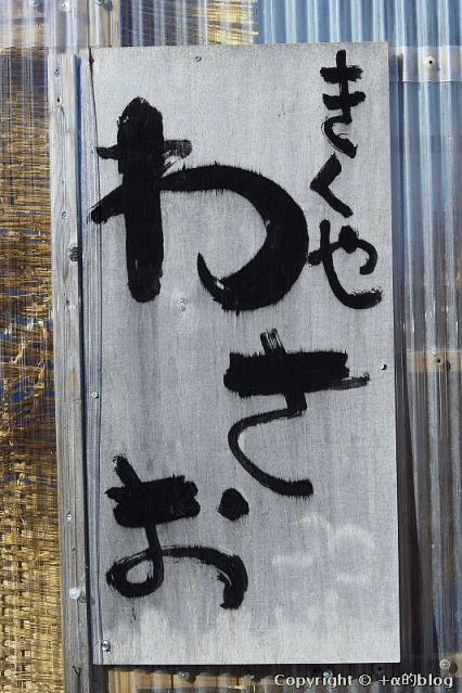 wasao1211nn_eip.jpg