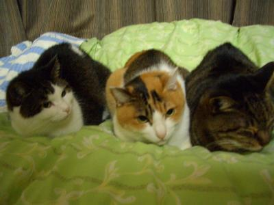 4プラで待ってますの3匹
