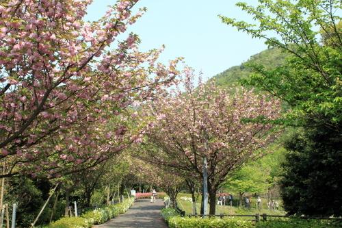 2010.5.4 maizuru 0006