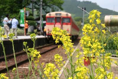 菜の花とキハ58