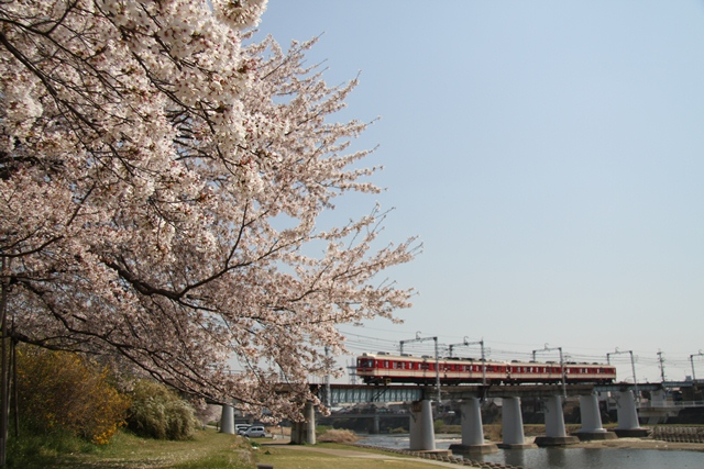 110414 桜と神鉄1