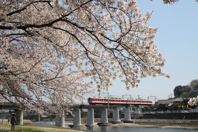 110414 桜と神鉄2