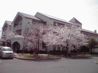 病院の桜 100404