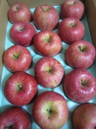 信州のリンゴ1
