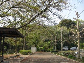 公園の桜も散って