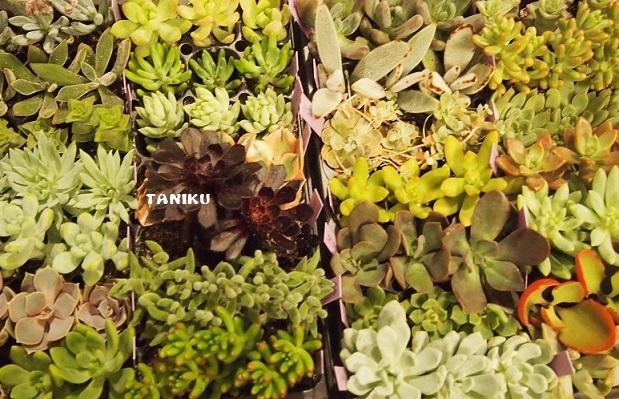 taniku111.jpg