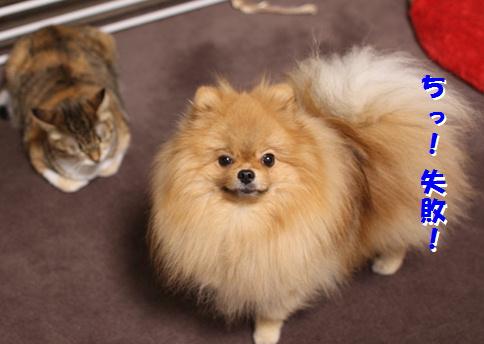 blogあそぼっ!犬が猫を誘うとき-4