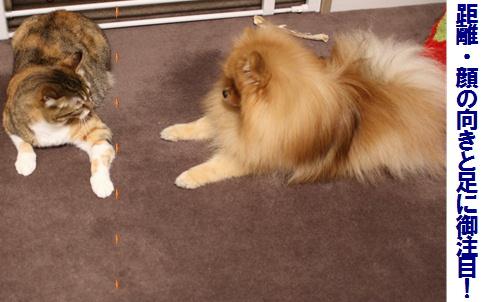 blogあそぼっ!犬が猫を誘うとき3-1
