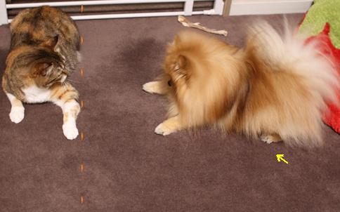 blogあそぼっ!犬が猫を誘うとき3-2b