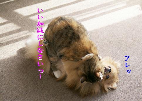 blog20141216-3.jpg