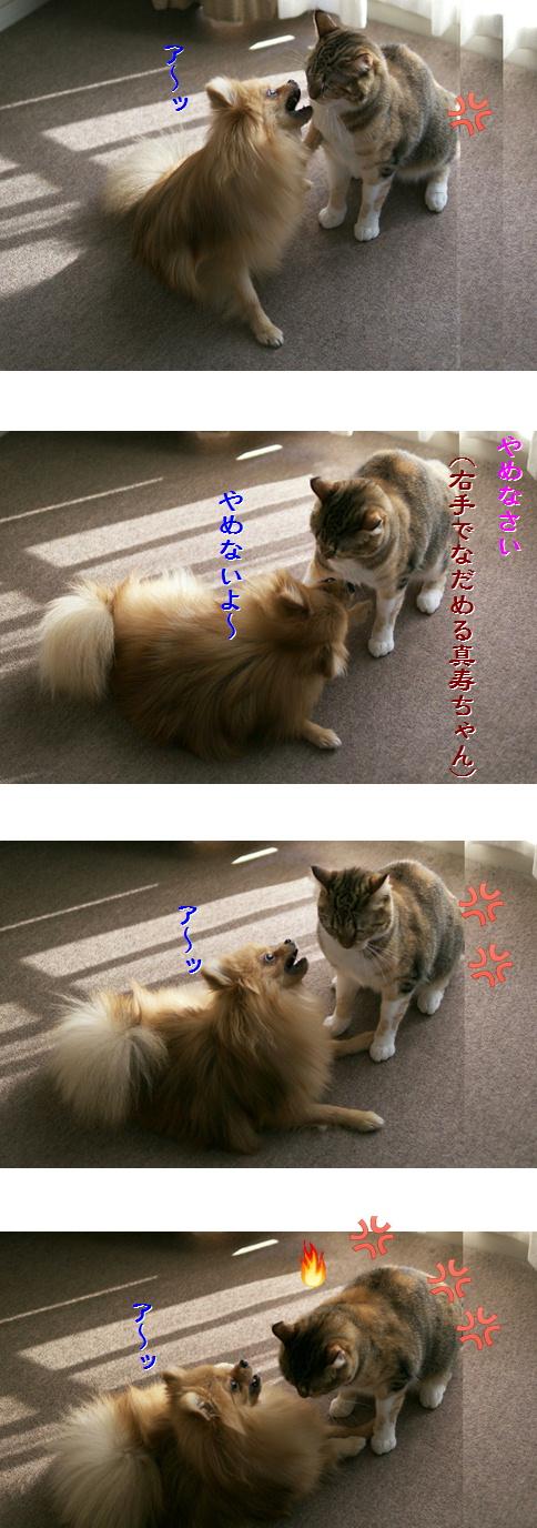 blog20141216.jpg