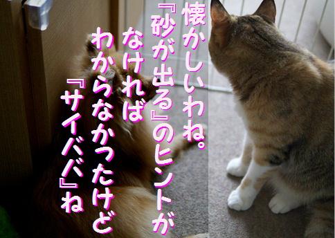 blogquiz1-8.jpg