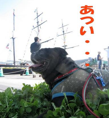 IMG_5014観光丸